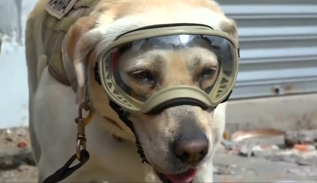 Earthquake Rescue Dog Honored