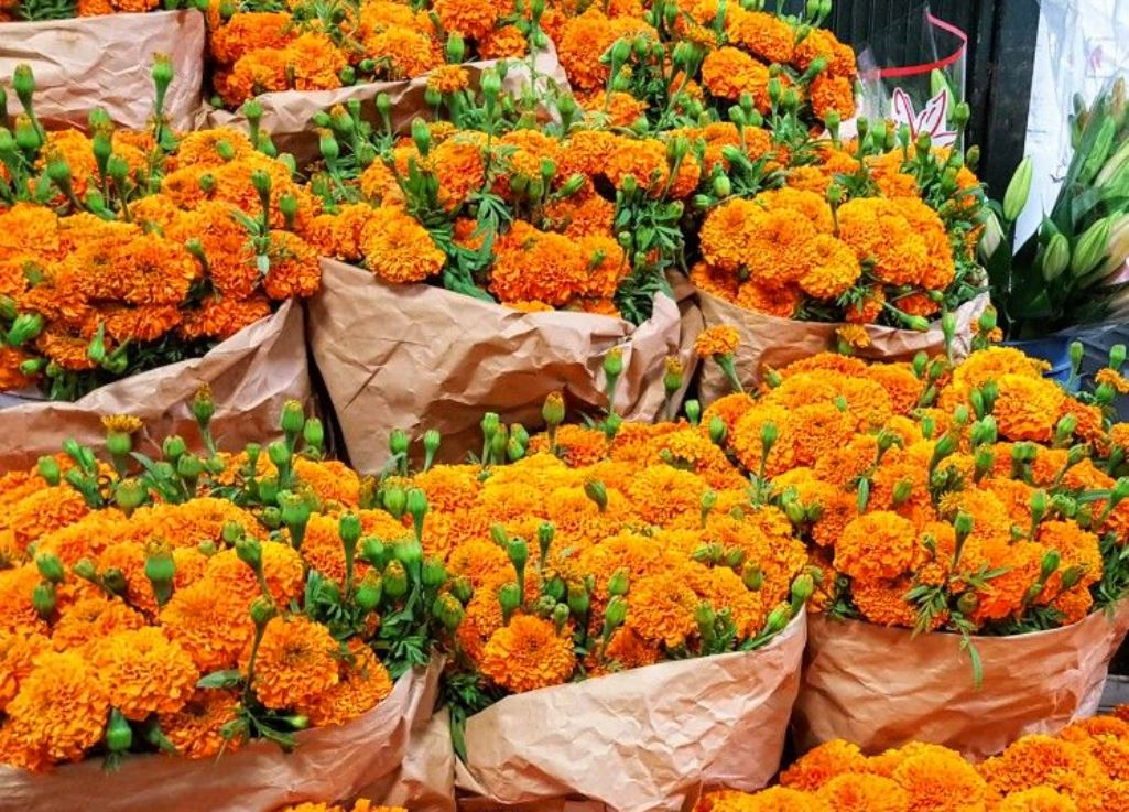 Mexican Marigolds, the Flower of the Dead