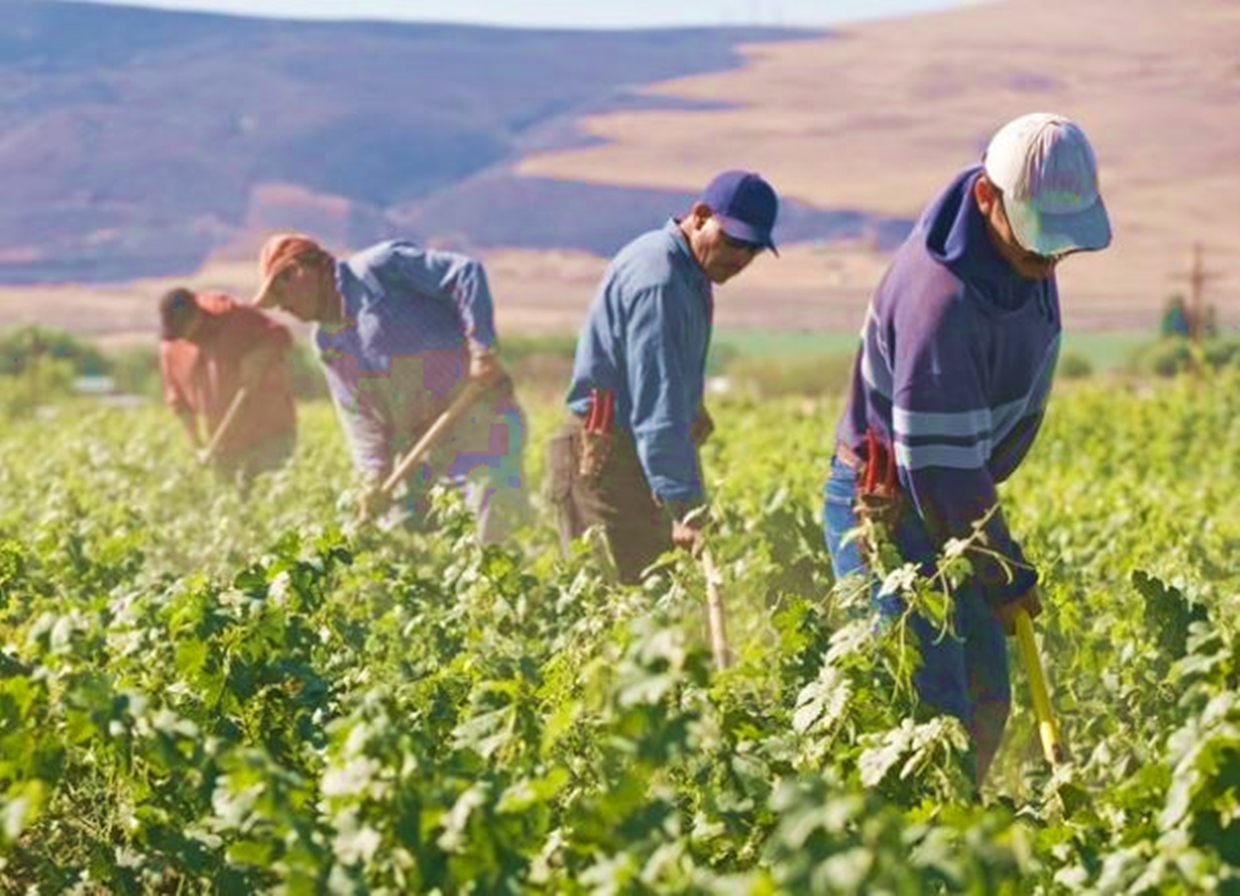 600 Mexican Seasonal Farm Workers to Travel to Canada