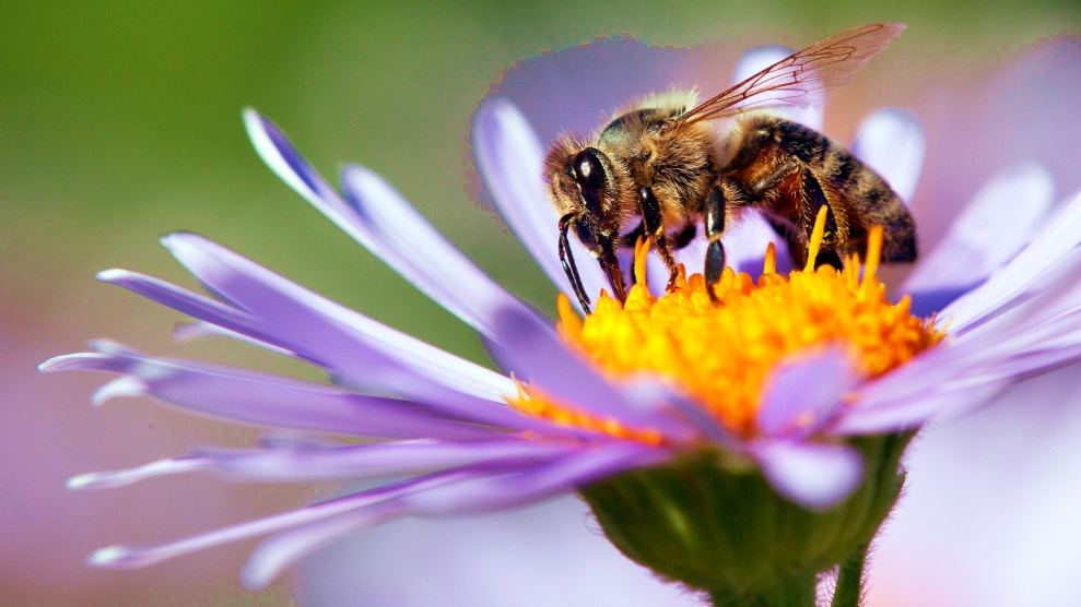 It's World Bee Day: Time to Let the Bees Be