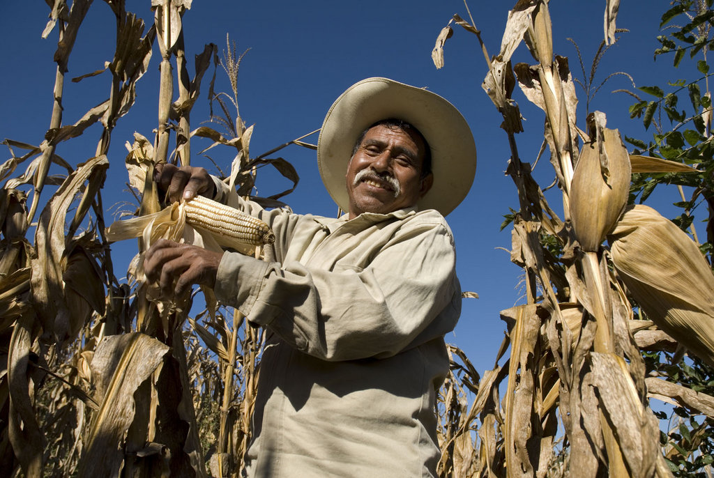 Mexican Government Offers Small Farmers Guaranteed Prices